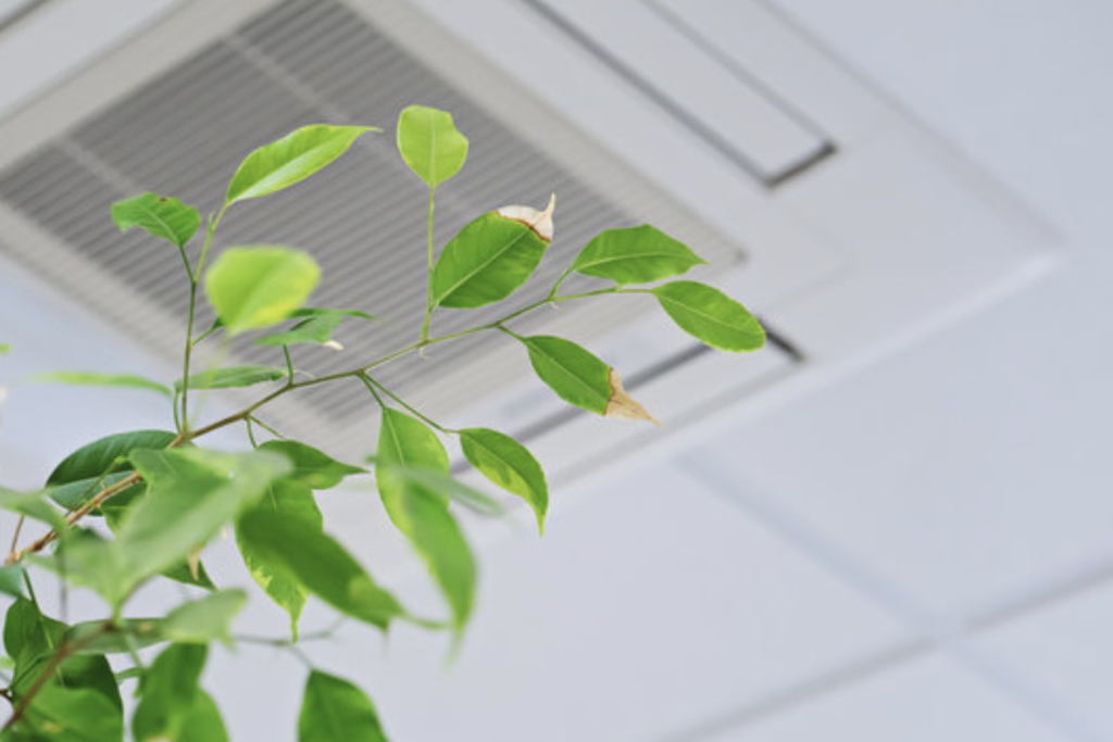 improving indoor air quality with 1st Call